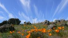 Serpentine Grassland Habitat